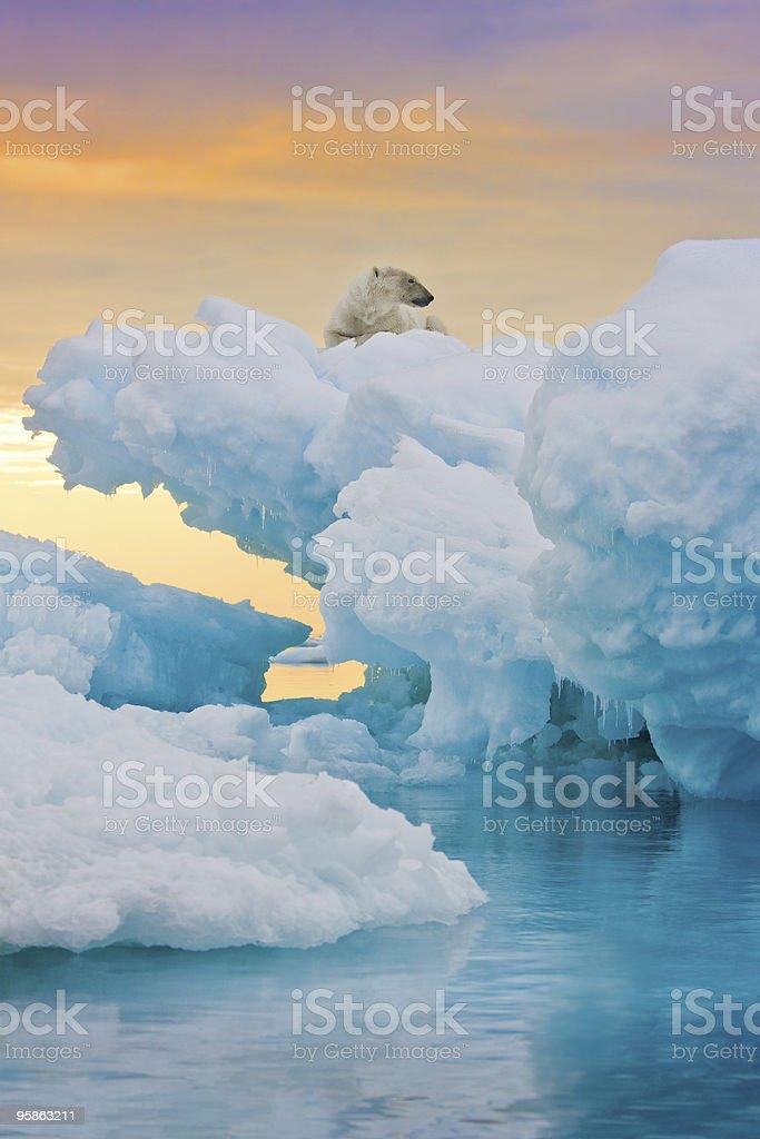 Polar Bear on Frozen Outcrop stock photo