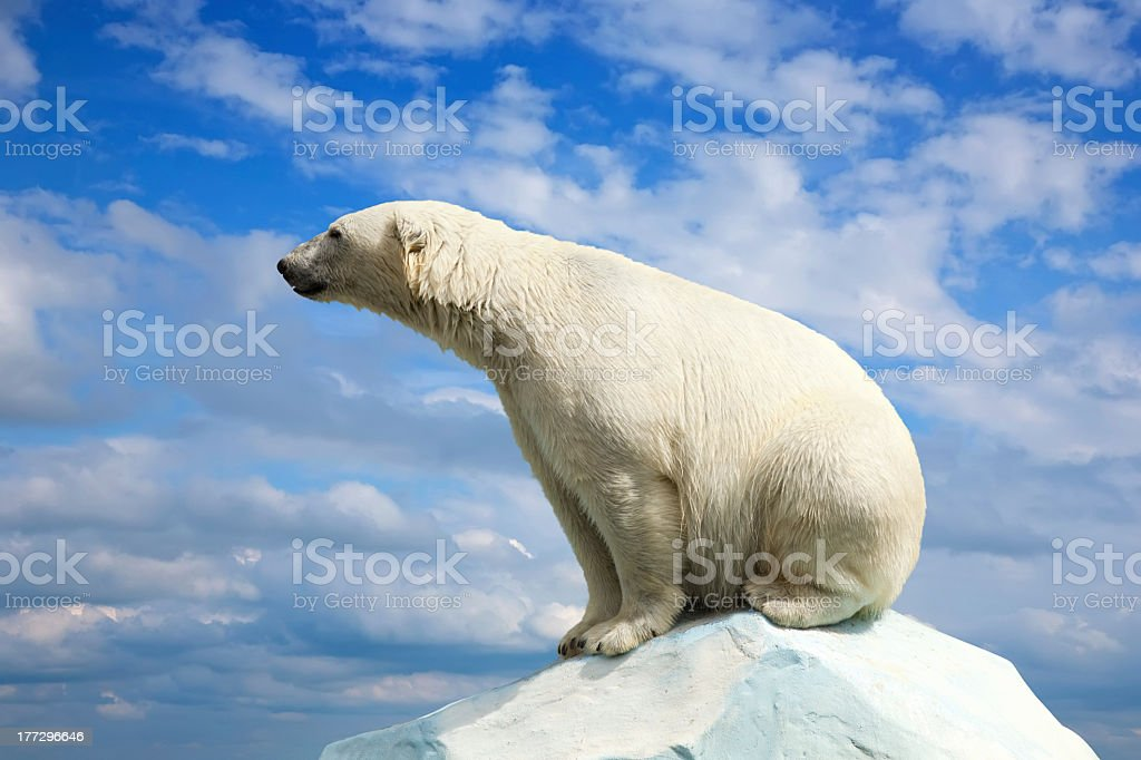 Polar bear on ice block with sky in background stock photo