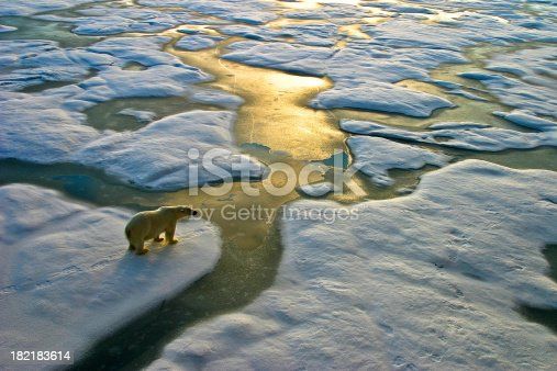 Polar bear on a wide surface of ice in the russian arctic close to Franz Josef Land.The light a