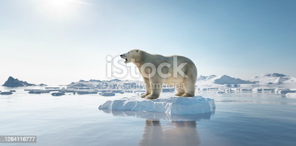 Polar bear on ice floe. Melting iceberg and global warming. Climate change