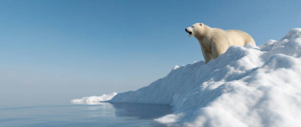 Polar bear on iceberg. Melting ice and global warming. stock photo