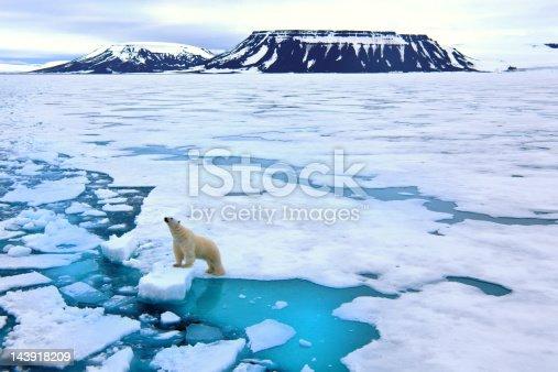 A heartwarming sunset shot of polar bears swimming and standing on pack ice in Kaktovik, Alaska