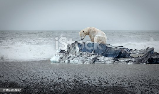Lonely polar bear on the floe and open sea behind