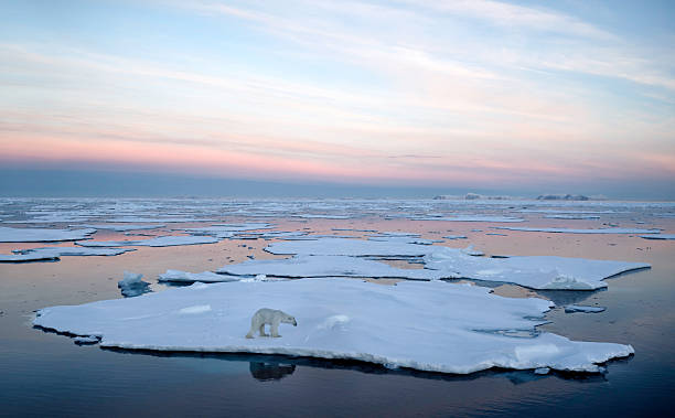 polar bear pack ice - iceberg ice formation stock pictures, royalty-free photos & images