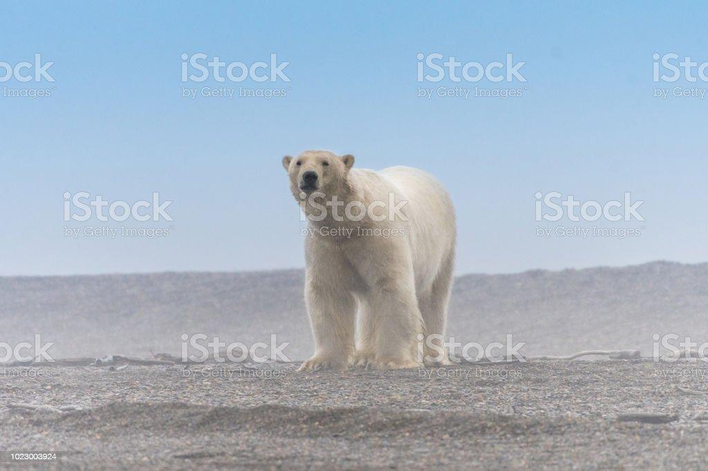 клуб потерпел фото белый медведь фургон окно как это мой