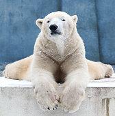 vector illustration of polar bear and friends standing on iceberg