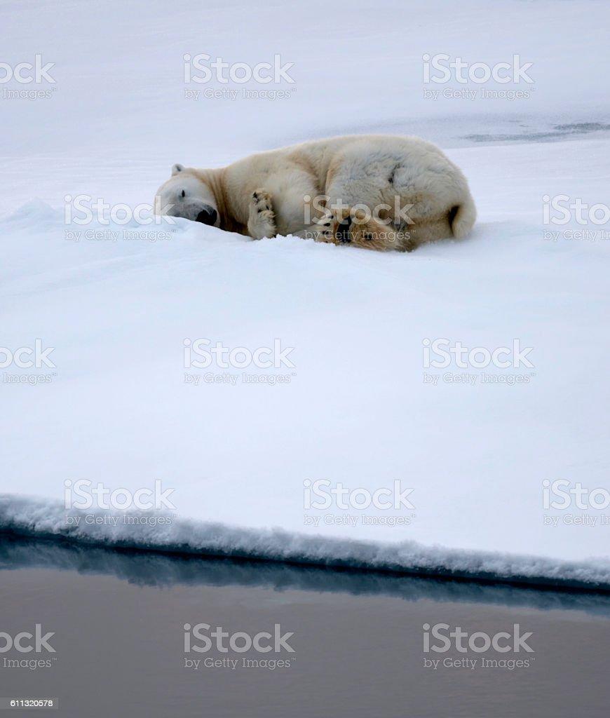 фото фото белый медведь фургон окно выбор дверей парадный