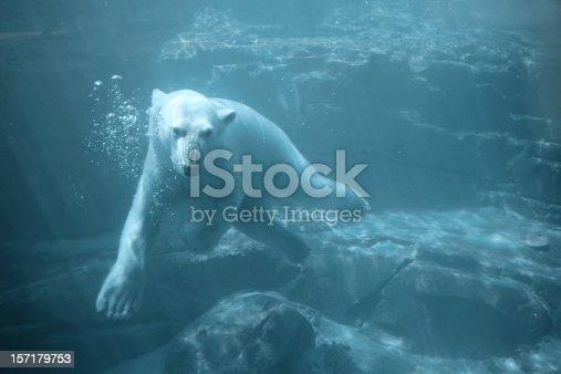 Underwater Polar Bear.