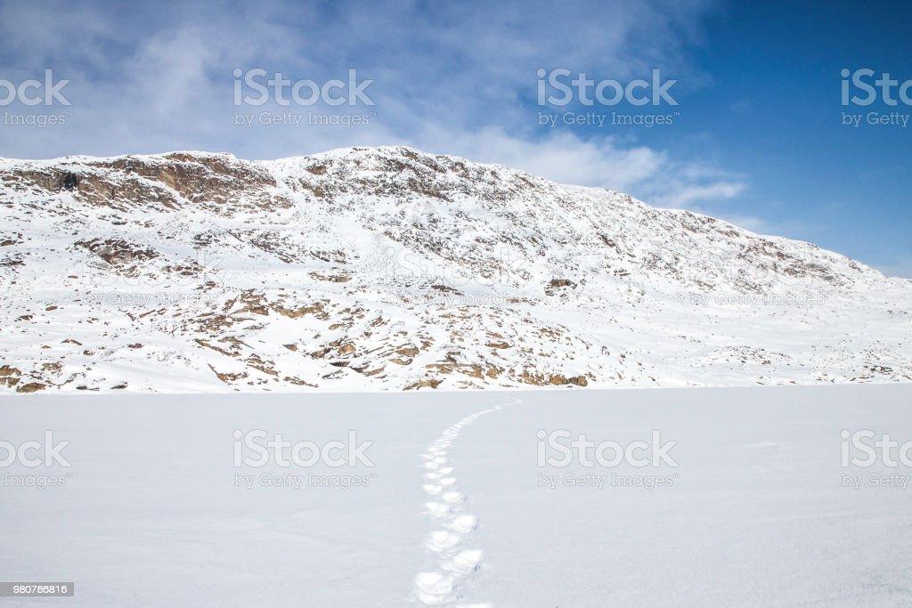 Polar bear tracks across the frozen fjords of Baffin Island, Canada stock photo