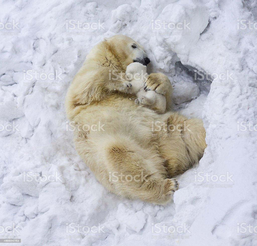 Polar bear with cub. Mother's love stock photo