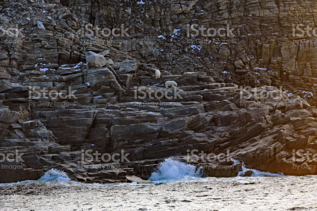 Polar Bears on a Remote Island in the Arctic stock photo