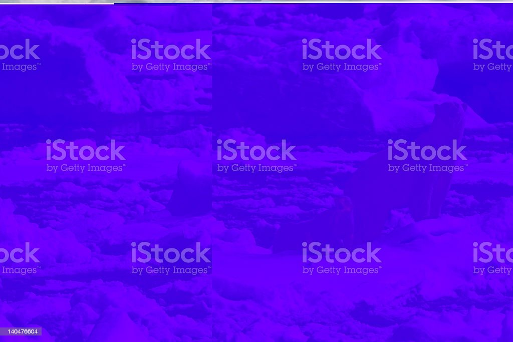 Polar bears with cumbs searching stock photo