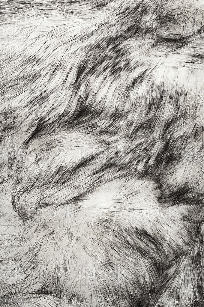 Polar fox fur texture in white stock photo