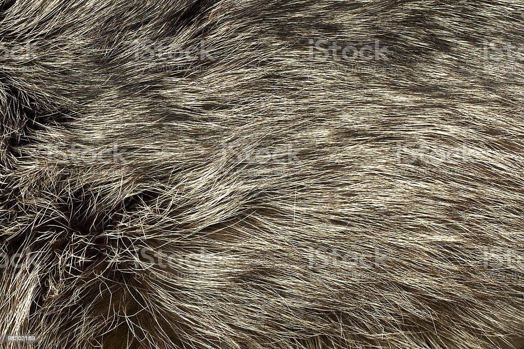 Polar pelliccia di volpe. Utile come sfondo foto stock royalty-free