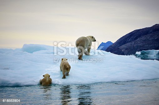 istock Polarbear mother with cubs 618553904