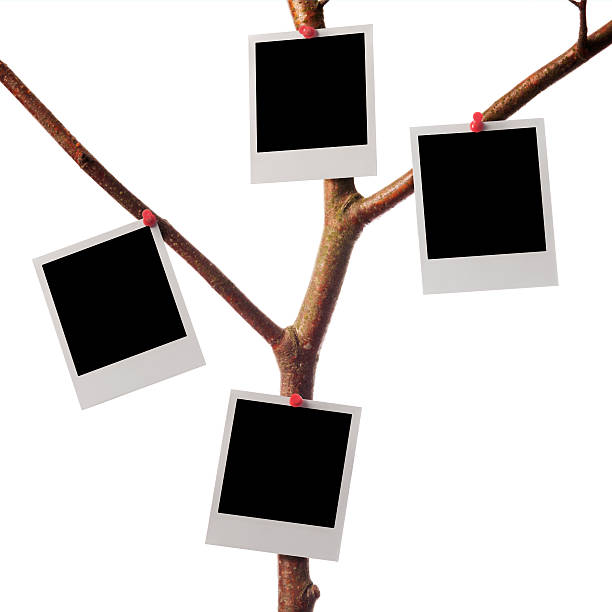 polaroid-foto - hajohoos stock-fotos und bilder