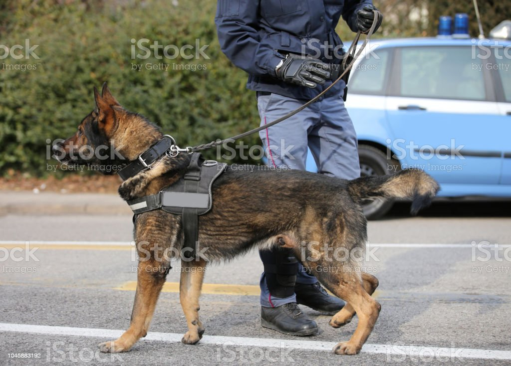 polcie dog and policeman stock photo
