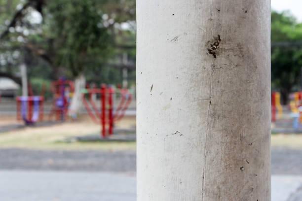 pole im park, thailand - pfosten stock-fotos und bilder