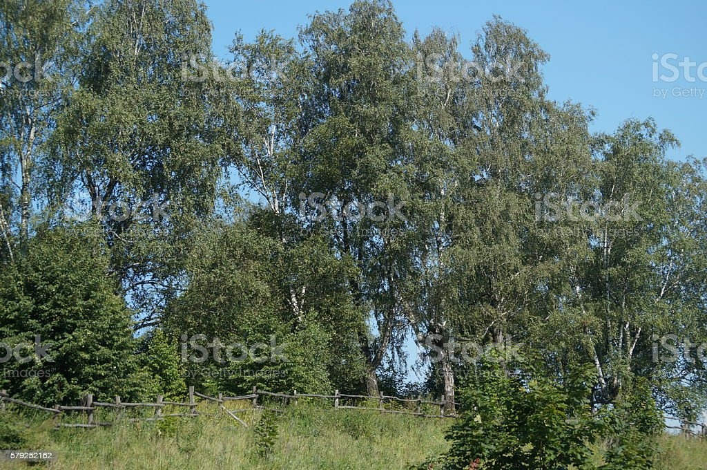 Polenovo, slope and magnificence of Russian nature stock photo