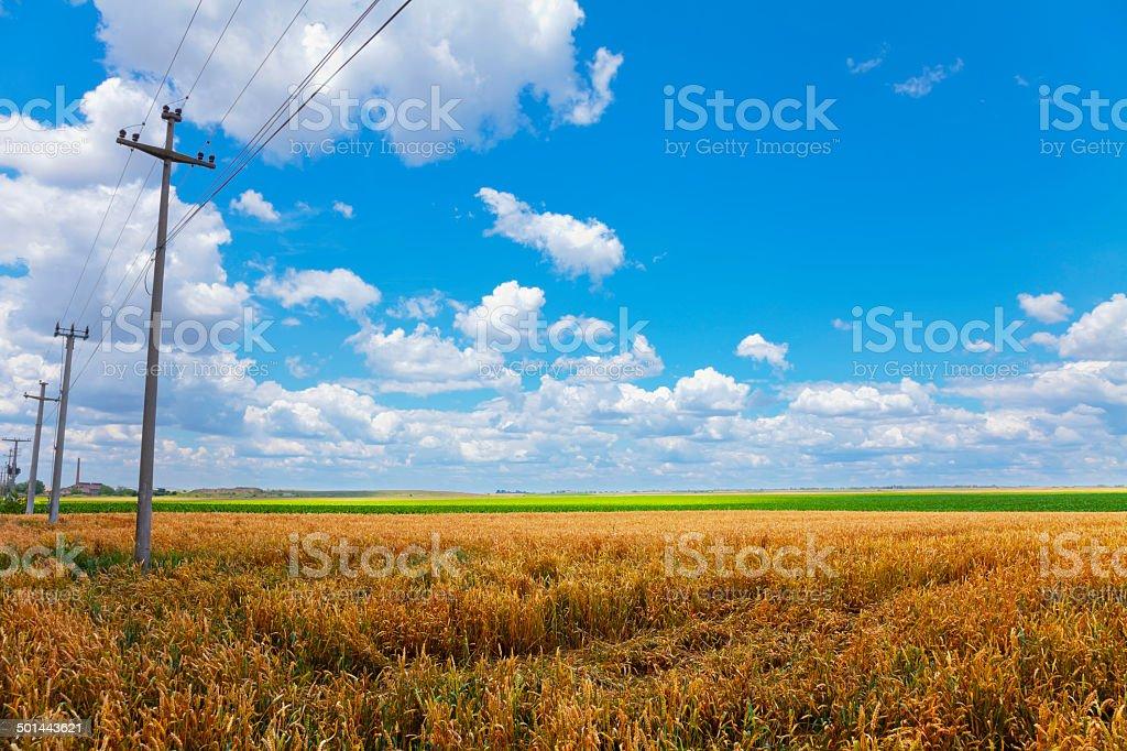 Totempfähle in den Feldern – Foto