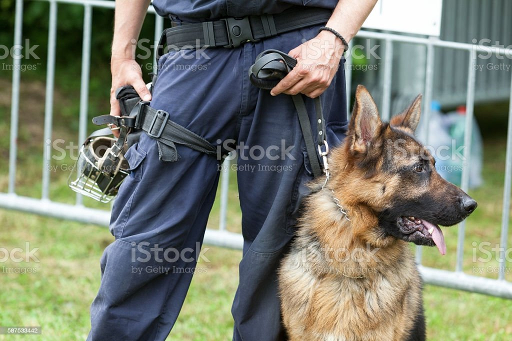 Police dog. Policeman with a German shepherd on duty. stock photo