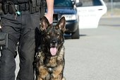 Police dog standing next to his handler