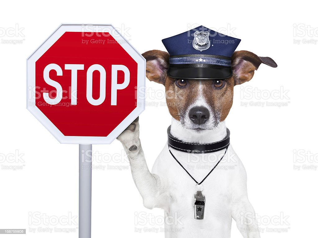 Police dog wearing cap holding up a stop sign stock photo