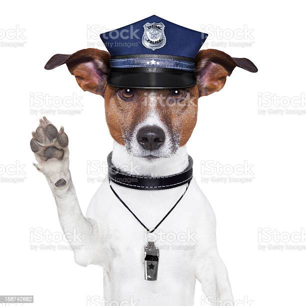 Police dog with hat and whistle raising its paw picture id158742682?b=1&k=6&m=158742682&s=612x612&h=mjantc6cz13vj21utwvllk61xoms3fo25hn1ine7awa=