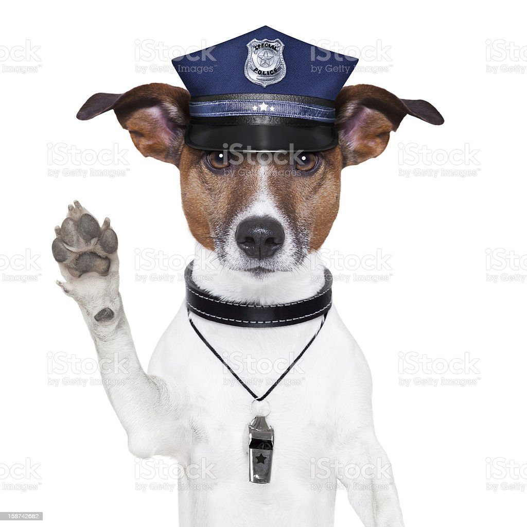 Police dog with hat and whistle raising its paw stock photo