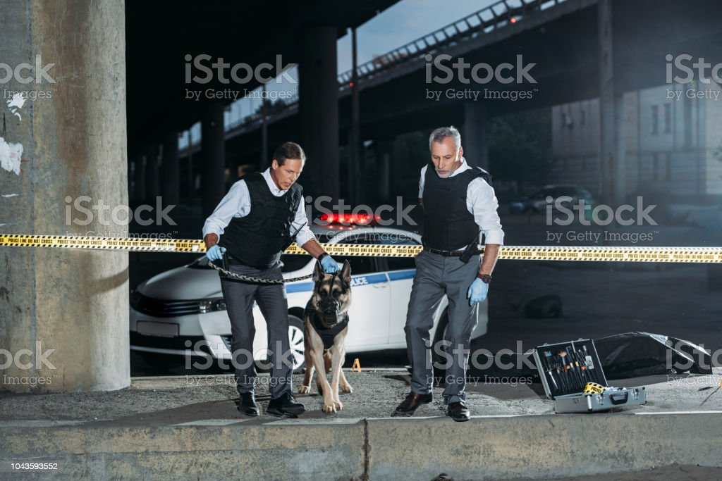 police officers with german shepherd on leash near cross line at crime scene stock photo