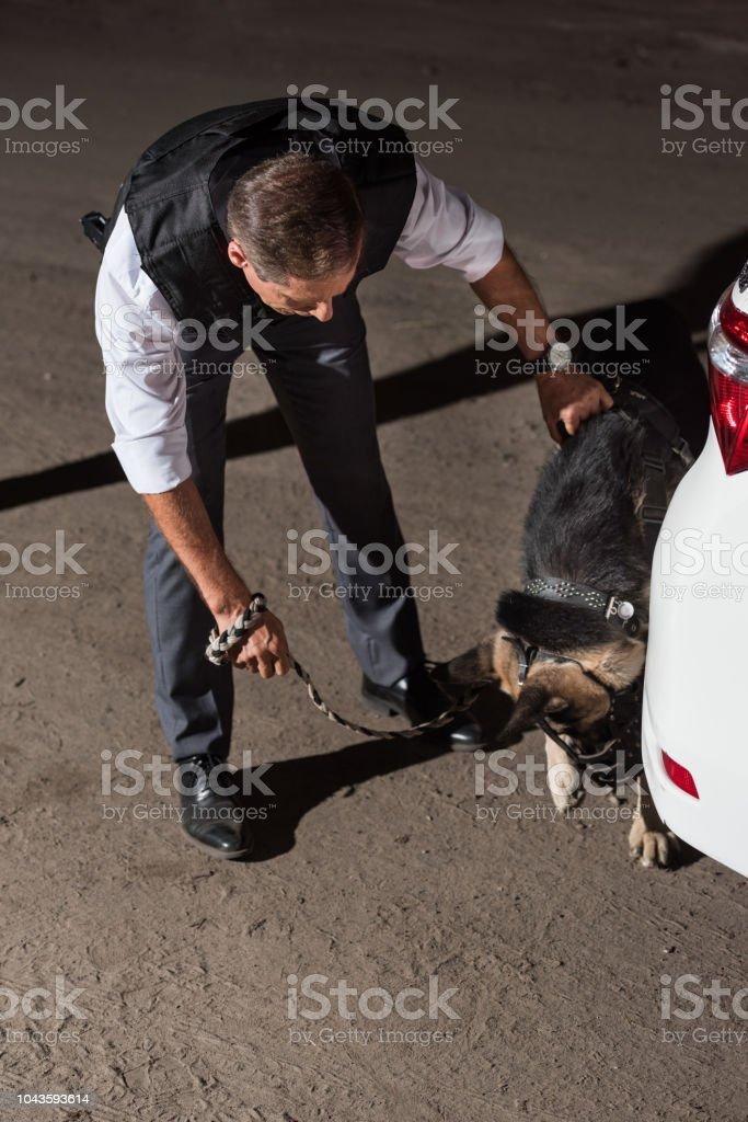policeman in bulletproof vest with german shepherd on leash near car at street stock photo