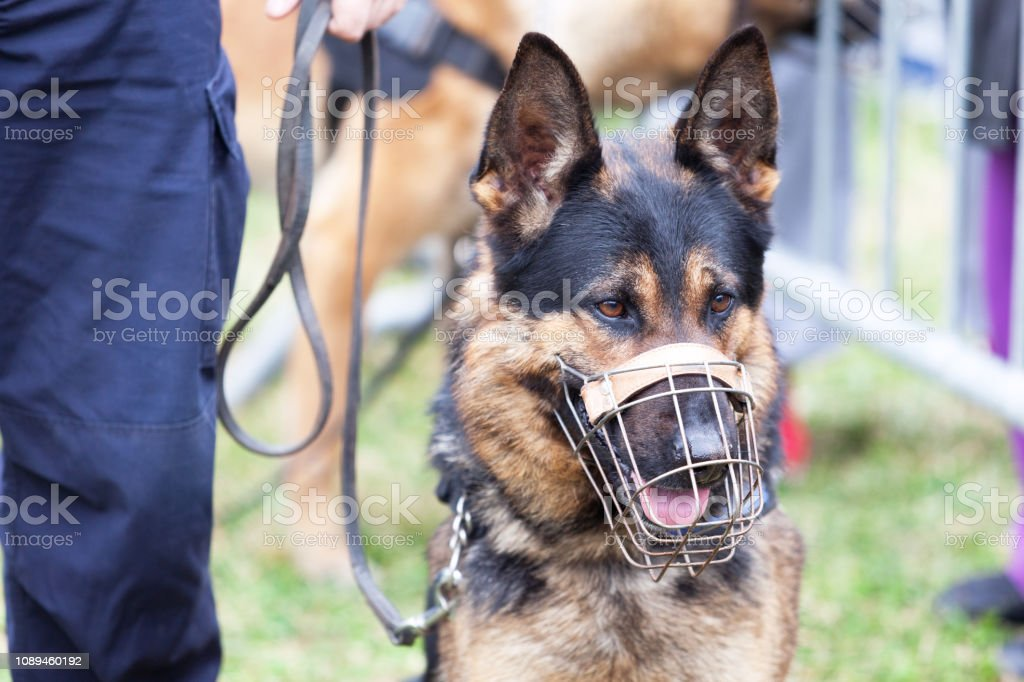 Policeman with a police dog stock photo