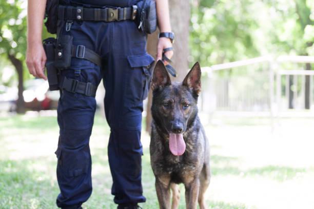 Polizist mit belgischem Malinois Polizeihund – Foto