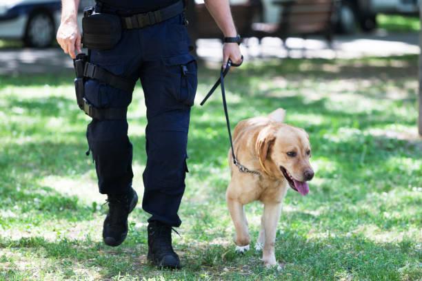 Polizist mit Polizeihund im Dienst – Foto