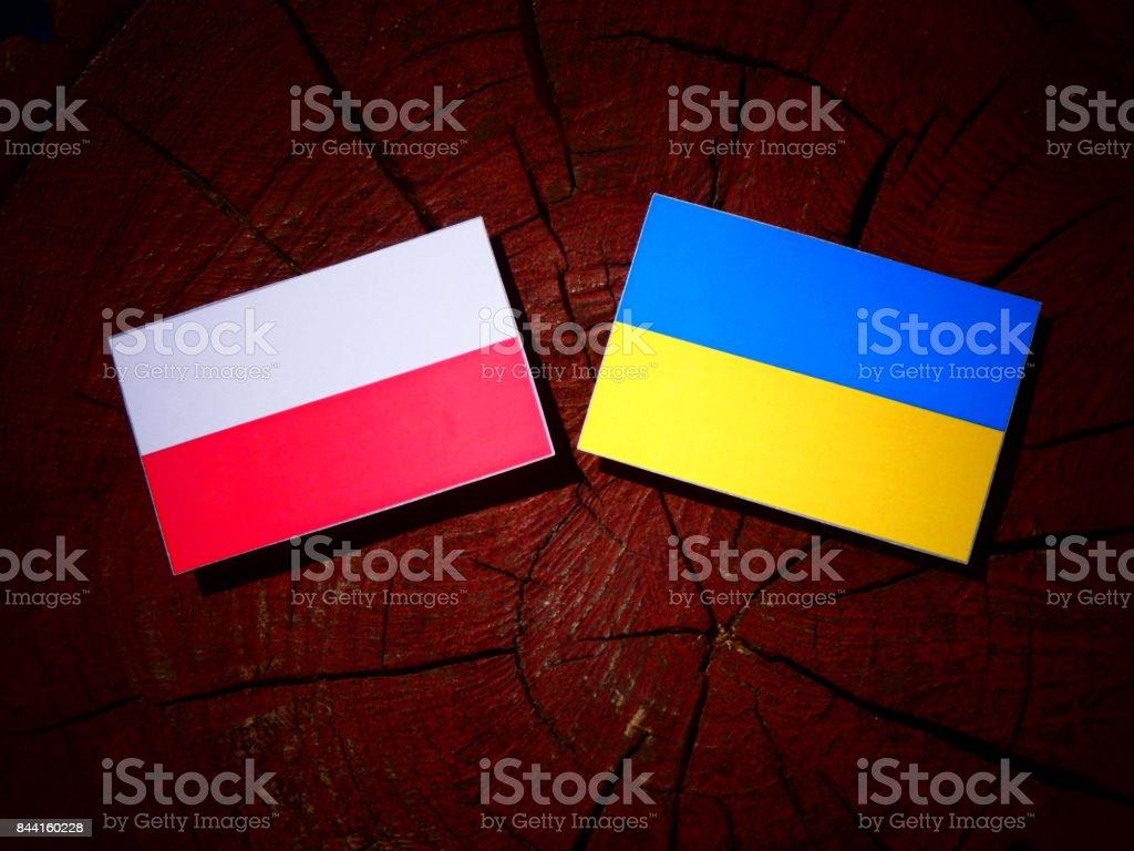 Polish flag with Ukrainian flag on a tree stump isolated stock photo