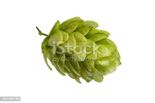 Close up on hop cone on white background