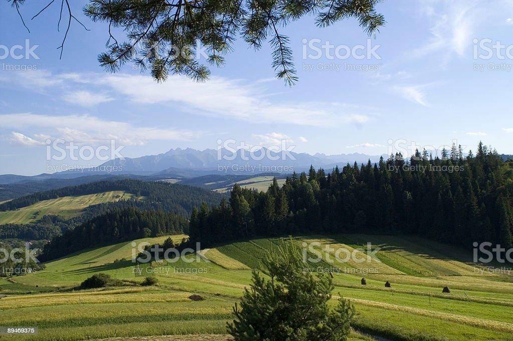 Polish nature royalty-free stock photo