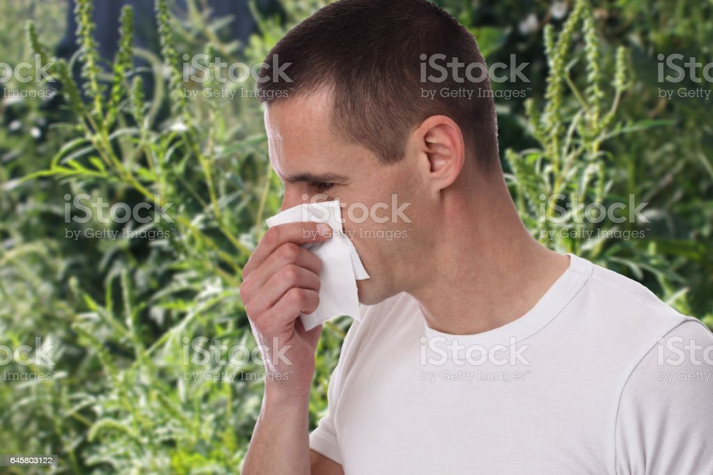 Pollen allergy, ambrosia artemisiifolia summer. Man sneezing in a tissue stock photo