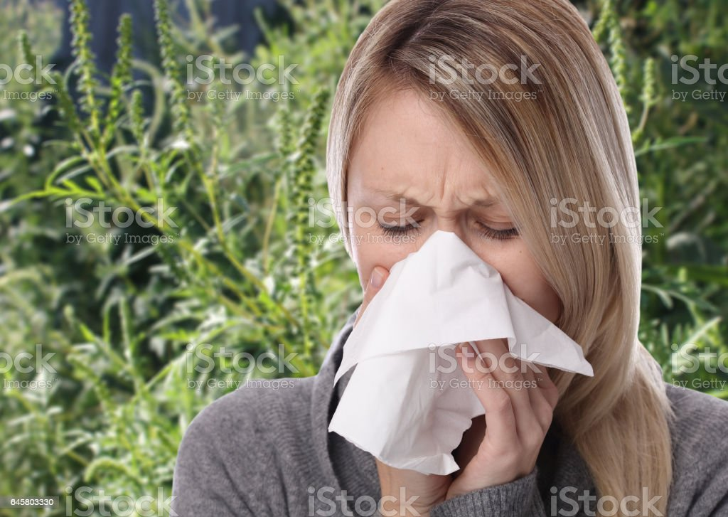 Pollen allergy, ambrosia artemisiifolia summer. Women sneezing in a tissue stock photo