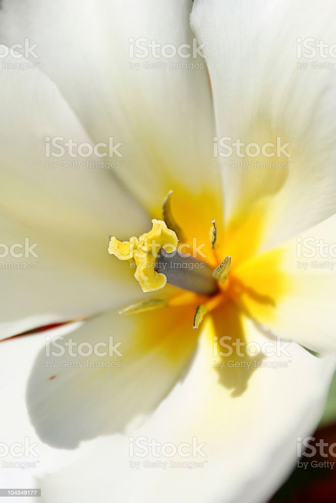 Pollen Count royalty-free stock photo