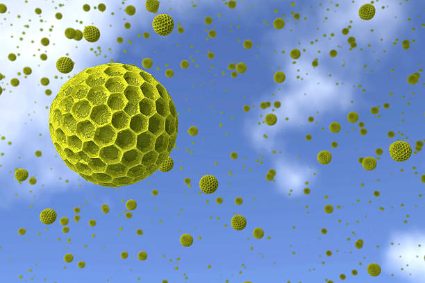 Pollen Getreide gegen den blauen Himmel. – Foto