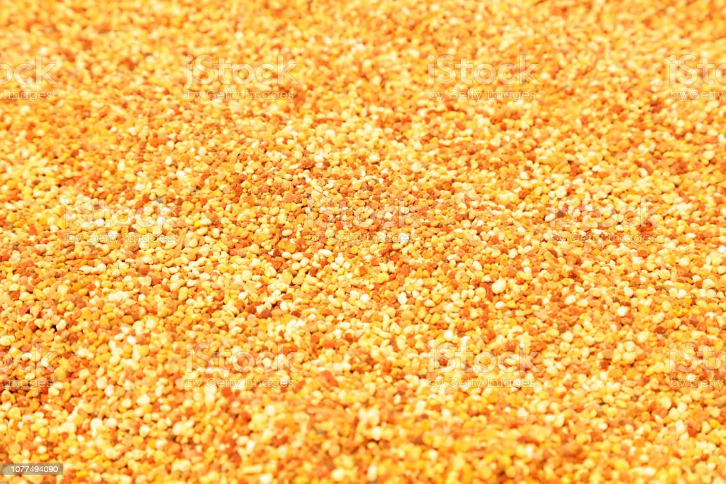 pollen grains, closeup of photo stock photo