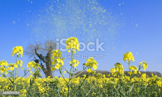 An image depicting the release of pollen into the air, a common problem of hay fever for millions of people around the world. The pollen is over emphasized to be seen.