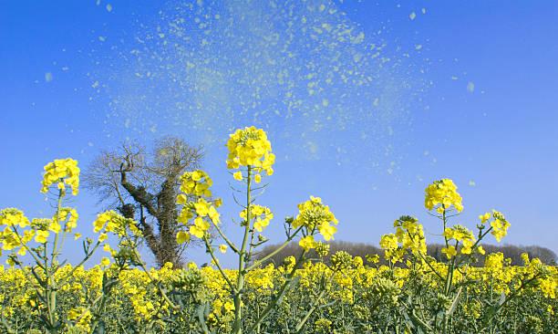pollen dans l'air healthcare2014 - allergies photos et images de collection