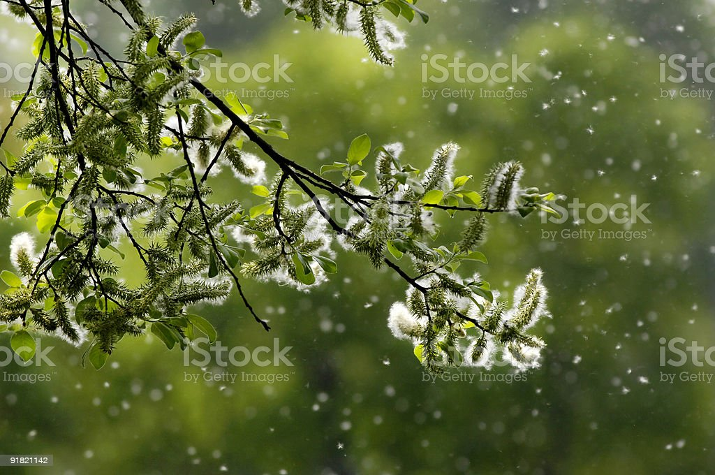 Pollen like snow stock photo