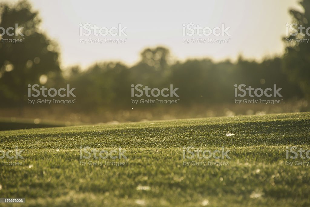 pollen on manicured lawn in summer royalty-free stock photo