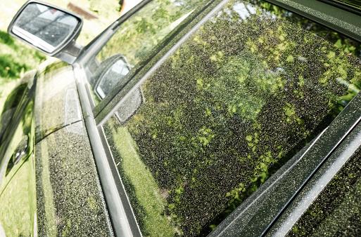 Pollen on car