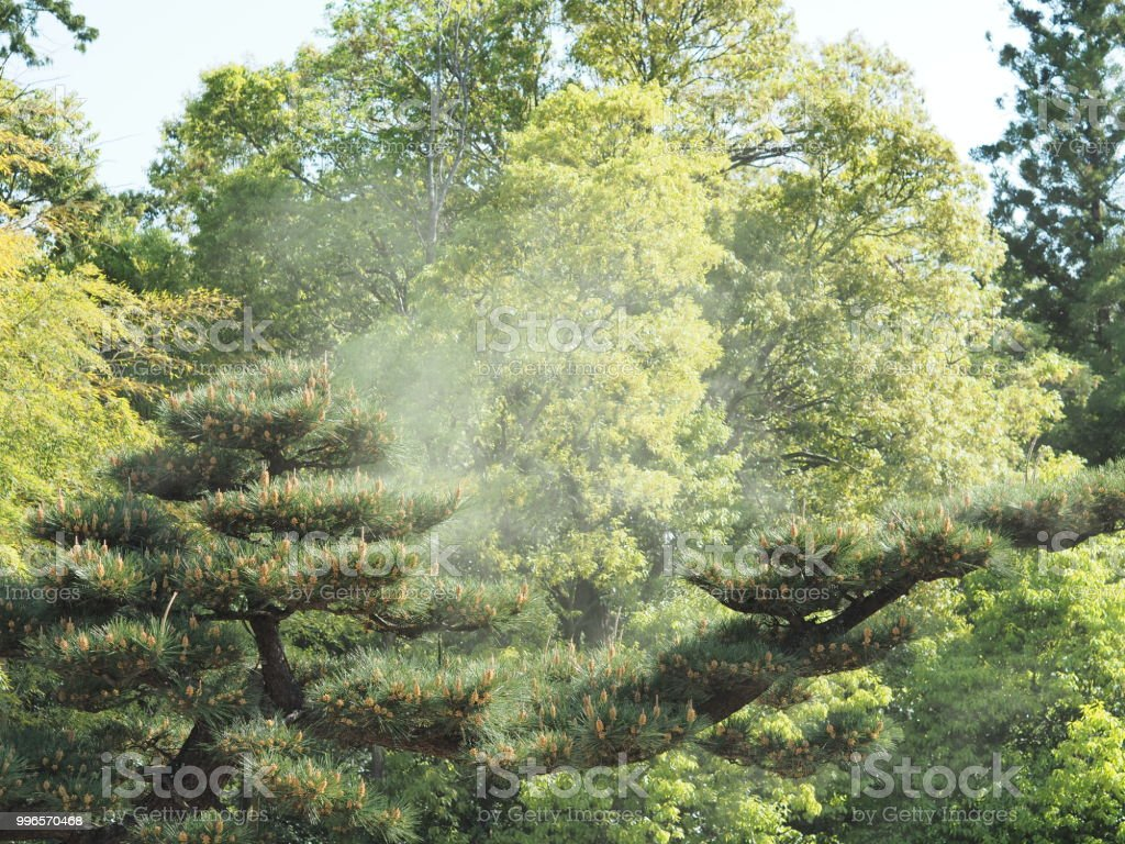 Pollen Scattering Stock Photo & More Pictures of Advertisement - iStock