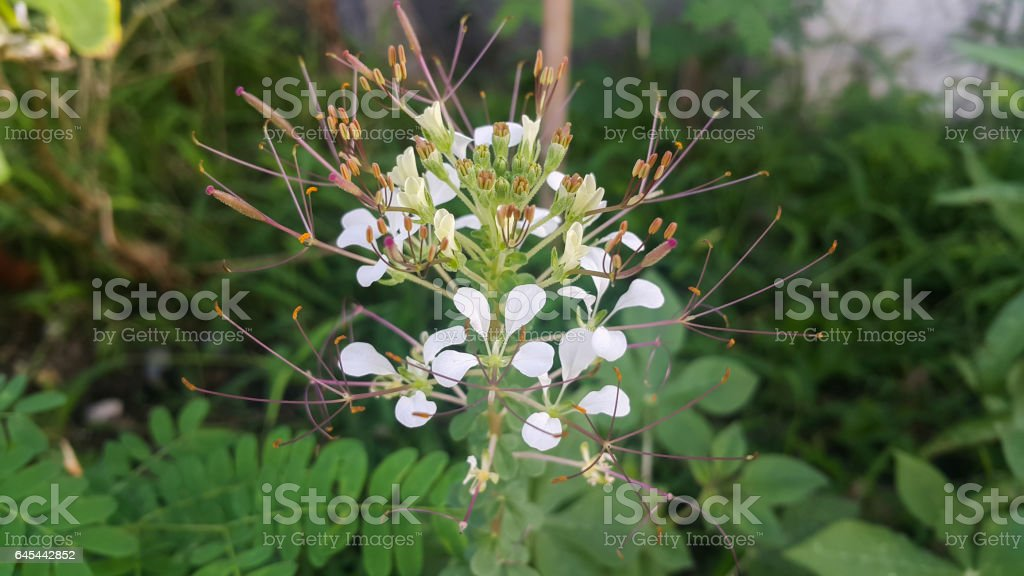 pollen tare in the background nature stock photo