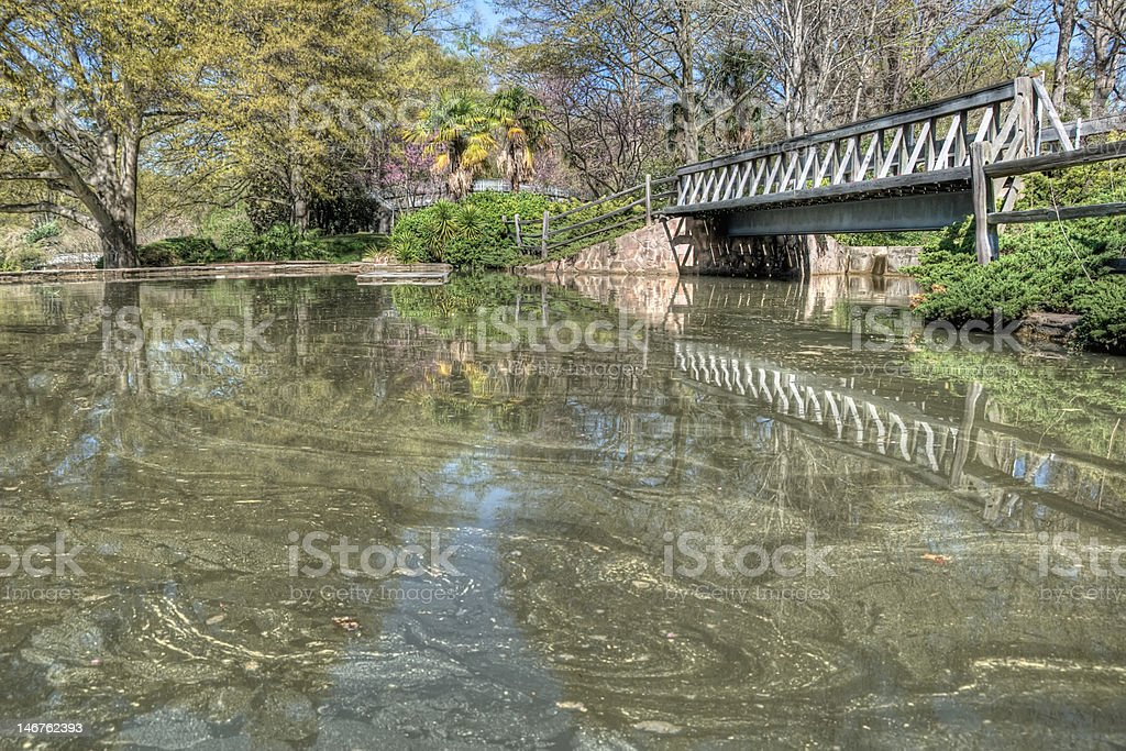 Pollinated Pond at Pullen Park stock photo